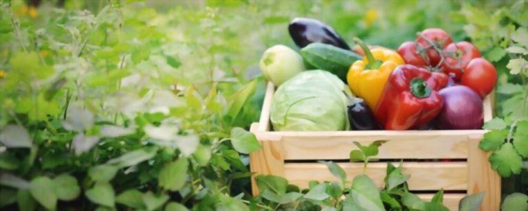 FSSAI for Agricultural Products