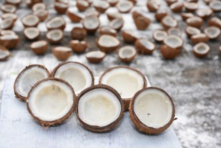 FSSAI for Coconut Oil Manufacturers